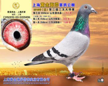 上海黄金海岸决赛第51名