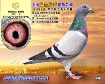 上海黄金海岸决赛第53名