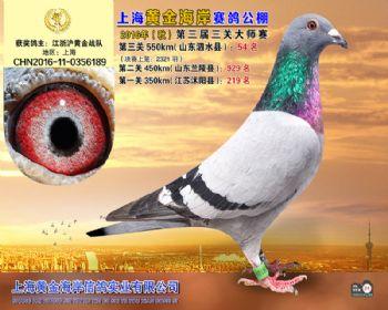 上海黄金海岸决赛第54名
