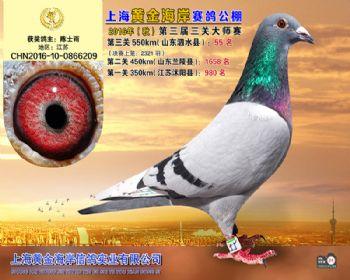 上海黄金海岸决赛第55名