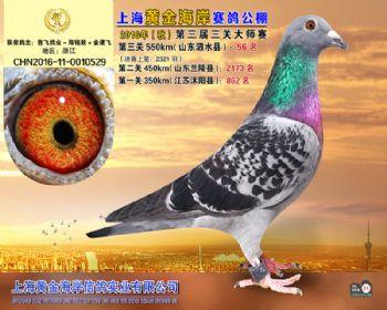 上海黄金海岸决赛第56名