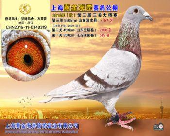 上海黄金海岸决赛第57名