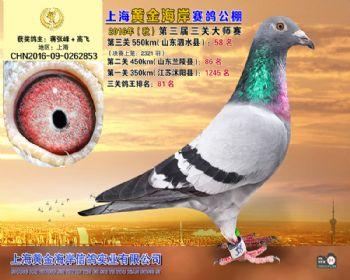 上海黄金海岸决赛第58名