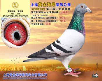 上海黄金海岸决赛第59名