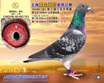 上海黄金海岸决赛第60名