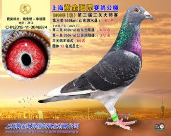 上海黄金海岸决赛第61名