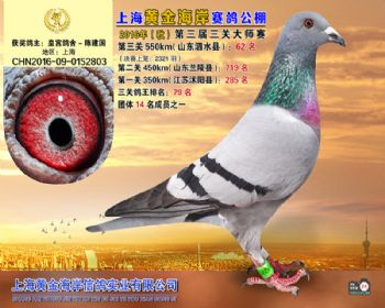 上海黄金海岸决赛第62名