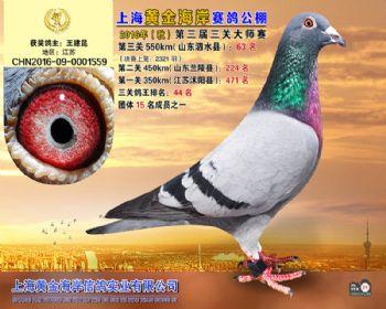 上海黄金海岸决赛第63名