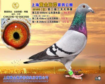 上海黄金海岸决赛第65名