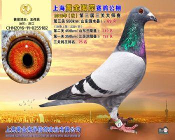 上海黄金海岸决赛第69名