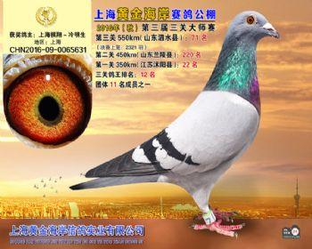 上海黄金海岸决赛第71名