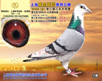 上海黄金海岸决赛第73名