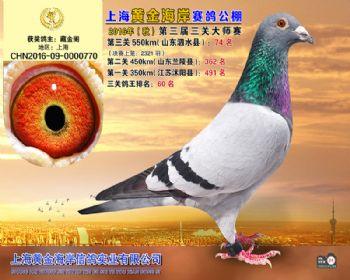 上海黄金海岸决赛第74名