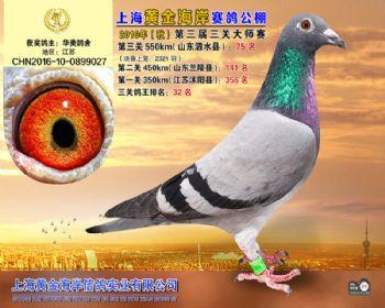 上海黄金海岸决赛第75名