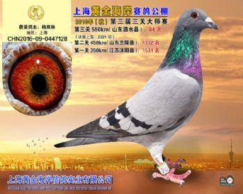 上海黄金海岸决赛第84名