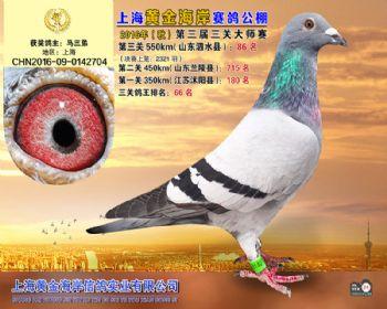 上海黄金海岸决赛第86名