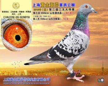 上海黄金海岸决赛第87名