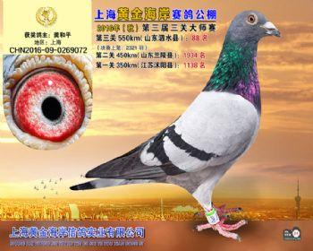 上海黄金海岸决赛第88名