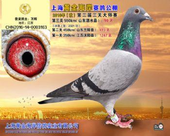上海黄金海岸决赛第90名