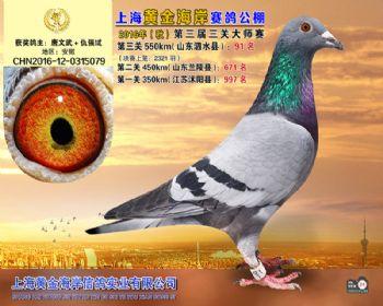 上海黄金海岸决赛第91名
