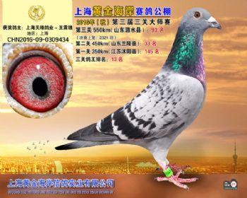 上海黄金海岸决赛第93名