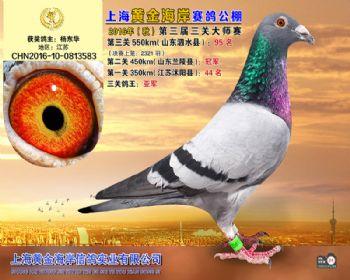 上海黄金海岸决赛第95名