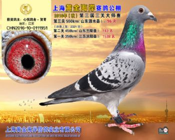 上海黄金海岸决赛第96名