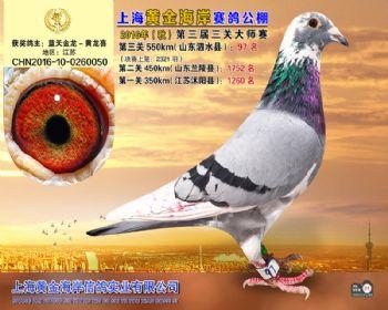上海黄金海岸决赛第97名