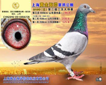 上海黄金海岸决赛第99名