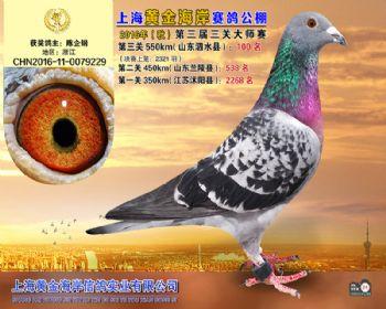 上海黄金海岸决赛第100名
