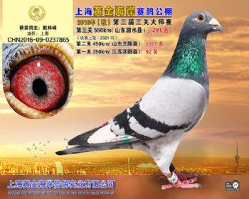 上海黄金海岸决赛第201名