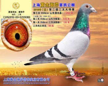 上海黄金海岸决赛第203名