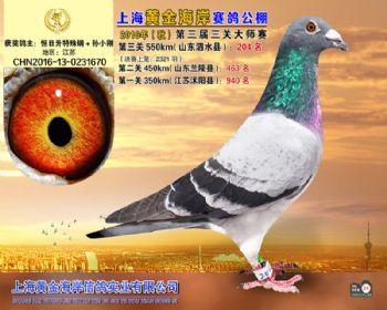 上海黄金海岸决赛第204名