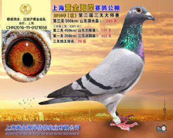 上海黄金海岸决赛第205名