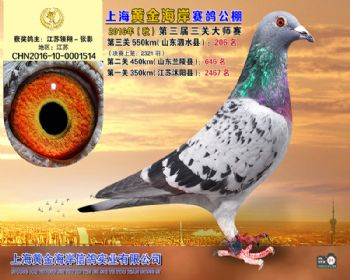 上海黄金海岸决赛第206名