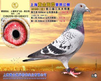 上海黄金海岸决赛第207名