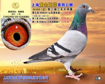 上海黄金海岸决赛第209名