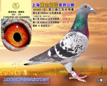 上海黄金海岸决赛第210名