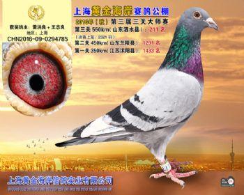上海黄金海岸决赛第211名