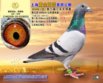 上海黄金海岸决赛第212名