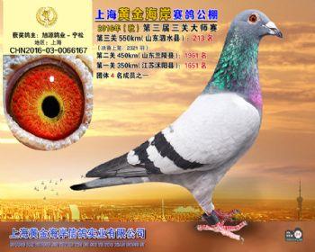 上海黄金海岸决赛第213名