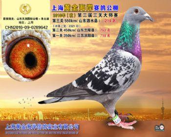 上海黄金海岸决赛第214名