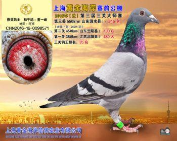上海黄金海岸决赛第215名