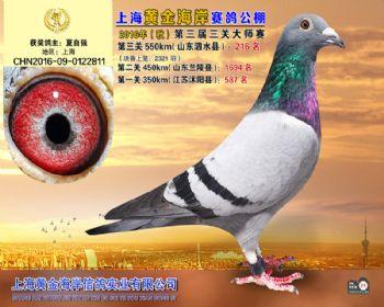 上海黄金海岸决赛第216名