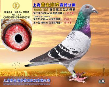 上海黄金海岸决赛第217名