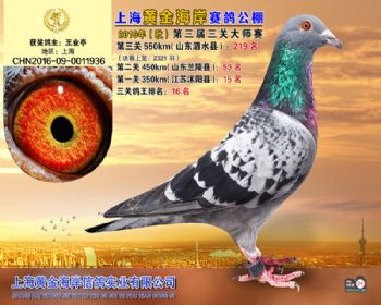 上海黄金海岸决赛第219名