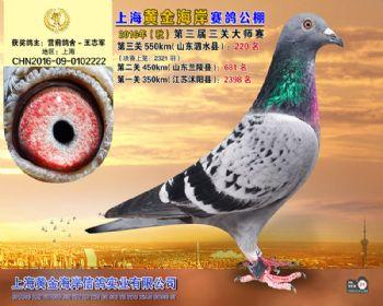 上海黄金海岸决赛第220名