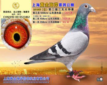 上海黄金海岸决赛第221名