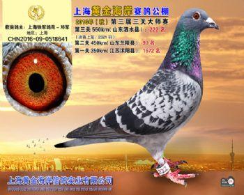 上海黄金海岸决赛第222名