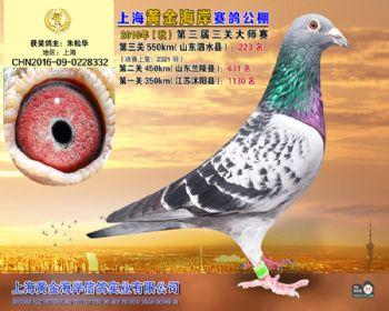 上海黄金海岸决赛第223名
